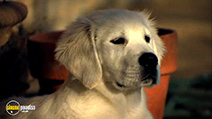 A still #18 from Adventures of Bailey: The Lost Puppy (2010)