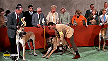 A still #5 from The Ugly Dachshund (1966)