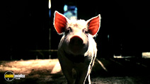Still #6 from Babe: Pig in the City