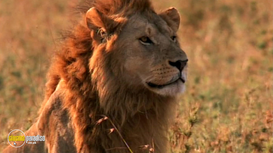 National Geographic: Big Cats online DVD rental