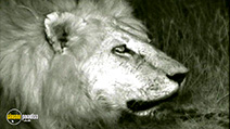 A still #9 from National Geographic: Big Cats (2007)