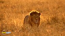 A still #8 from National Geographic: Big Cats (2007)