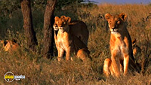 A still #1 from National Geographic: Big Cats (2007)