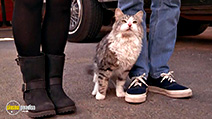 A still #3 from That Darn Cat (1997)