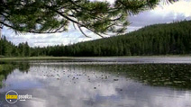 Still #7 from America the Beautiful: The National Forest of Utah