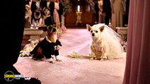 Still #2 from Beverly Hills Chihuahua 2