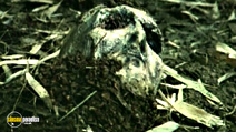 Still #8 from Zombie Flesh Eaters