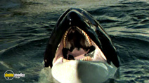 Still #1 from Orca the Killer Whale