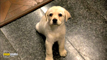 Still #2 from Quill: The Life of a Guide Dog