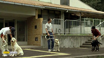 Still #7 from Quill: The Life of a Guide Dog