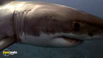 Still #4 from National Geographic: Planet Carnivore - Great White Sharks