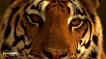 Still #2 from Wildlife Special: Tiger