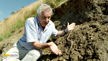 Still #6 from David Attenborough: Life in the Undergrowth: Series
