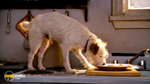 A still #4 from Hotel for Dogs