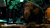 Still #6 from Zookeeper
