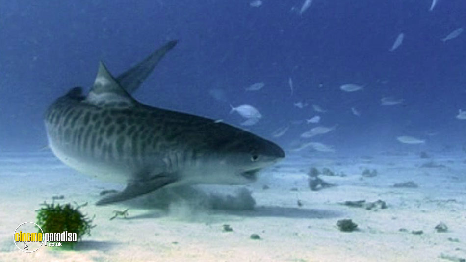 National Geographic: Tiger Sharks online DVD rental