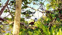Still #3 from Island of Lemurs: Madagascar