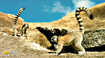 Still #4 from Island of Lemurs: Madagascar