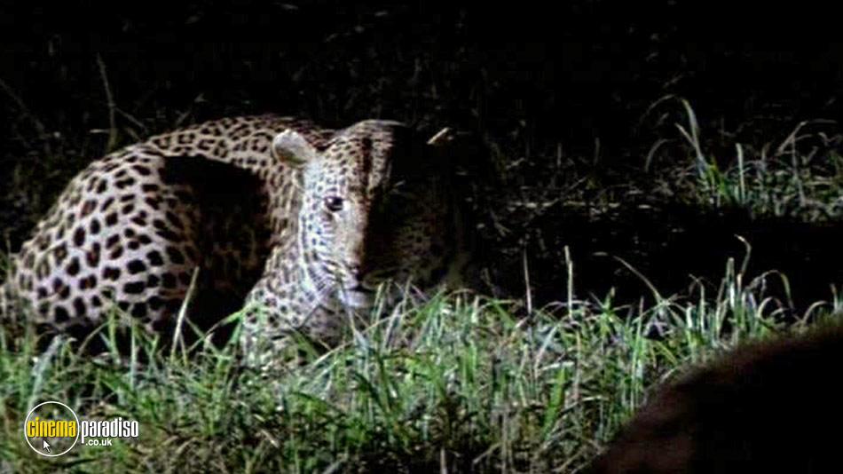 National Geographic: Stalking Leopards online DVD rental