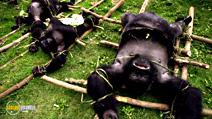 Still #1 from National Geographic: Gorilla Murders: Lost Gorillas of Virunga