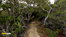 Still #5 from The Galapagos Affair: Satan Came to Eden