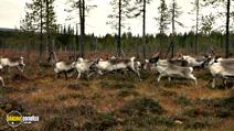 Still #2 from Aatsinki: The Story of Arctic Cowboys