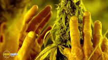 Still #8 from Kid Cannabis