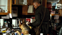 A still #9 from I Am Legend with Will Smith