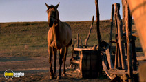 A still #17 from Dances with Wolves