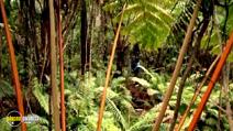Still #5 from Hidden Hawaii