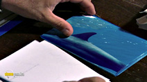 Still #4 from Animal Nation: Spinner Dolphins