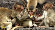 Still #1 from Monkey Planet