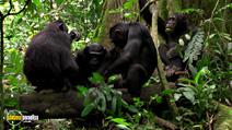 Still #6 from Monkey Planet