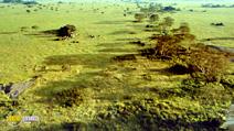 Still #2 from Africa: The Serengeti