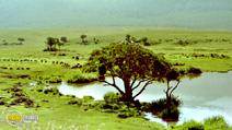 Still #3 from Africa: The Serengeti