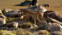 Still #7 from Africa: The Serengeti