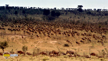 Still #8 from Africa: The Serengeti
