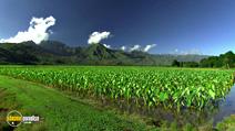 Still #5 from HD Window: Hawaii