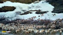 Still #3 from Alaska: Spirit of the Wild