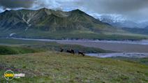 Still #7 from Alaska: Spirit of the Wild