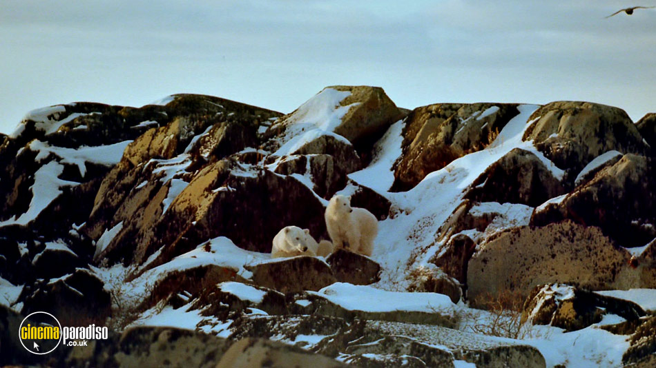 Alaska: Spirit of the Wild online DVD rental