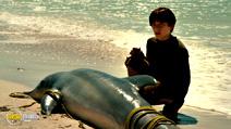 Still #3 from Dolphin Tale