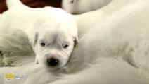 Still #2 from Santa Paws 2: The Santa Pups