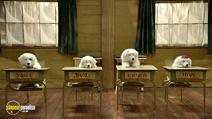 Still #3 from Santa Paws 2: The Santa Pups