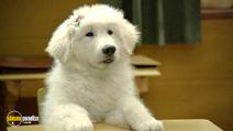 Still #4 from Santa Paws 2: The Santa Pups