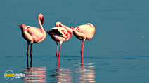 Still #2 from The Crimson Wing: Mystery of the Flamingos