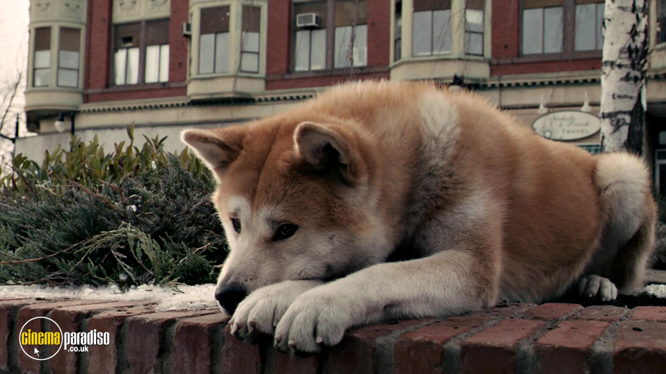 hachiko a dogs story hindi dubbed rar