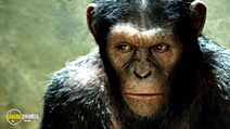 A still #42 from Rise of the Planet of the Apes