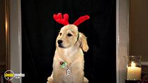 Still #4 from Santa Buddies