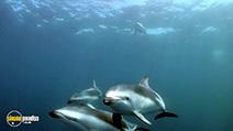 Still #7 from Dolphins